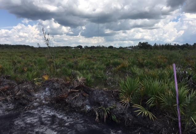 Holopaw Florida land for sale atv hunt camp