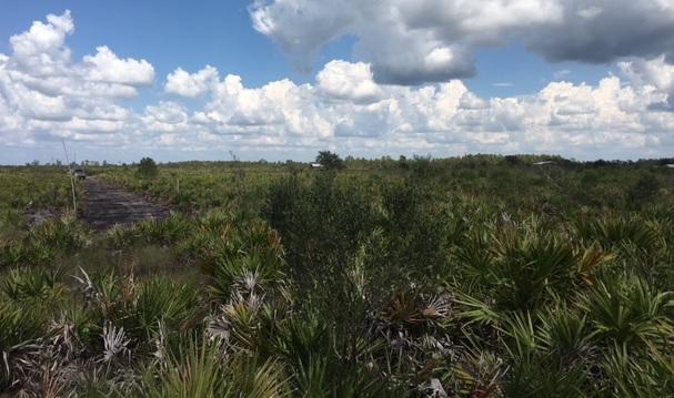 Holopaw Florida Suburban Estates FL Recreational Land atv hunt camp 4x4